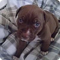 Adopt A Pet :: Twinkle Blue Eyes - Marlton, NJ