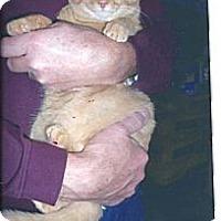 Adopt A Pet :: Chipper - Acme, PA