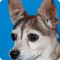 Adopt A Pet :: suzie q - Phoenix, AZ