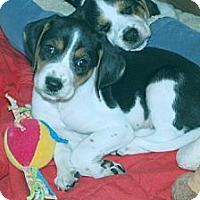 Adopt A Pet :: Tara - Minneola, FL