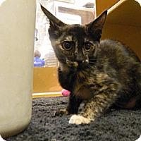 Adopt A Pet :: Ellen - The Colony, TX