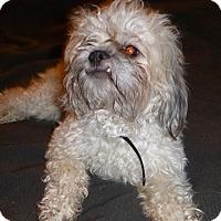 Adopt A Pet :: Griffin - Oak Creek, WI
