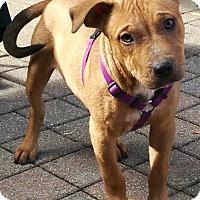 Adopt A Pet :: Browning - Mount Juliet, TN