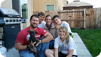 Boxer/Cairn Terrier Mix Puppy for adoption in Sacramento, California - Storm