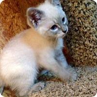 Adopt A Pet :: MacPhearson - McDonough, GA