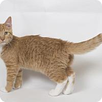 Adopt A Pet :: Bruce - Lombard, IL