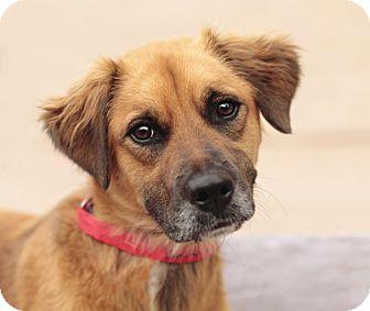 Golden Retriever/Terrier (Unknown Type, Medium) Mix Dog for adoption in Marietta, Georgia - Grace