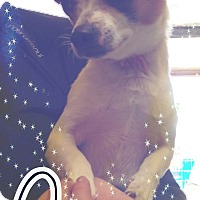 Adopt A Pet :: Bingo - Odessa, TX
