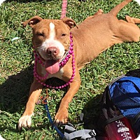 Adopt A Pet :: Carol - St. Francisville, LA