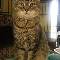 Adopt A Pet :: Nel - New Albany, OH