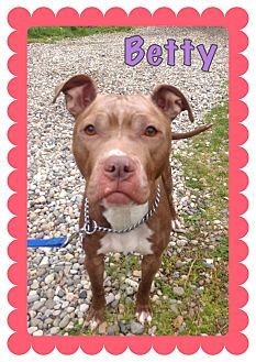 Boxer/Terrier (Unknown Type, Medium) Mix Dog for adoption in Tinton Falls, New Jersey - BETTY