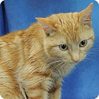Adopt A Pet :: Phoenix - Joplin, MO