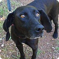 Adopt A Pet :: Cristalle - CUMMING, GA