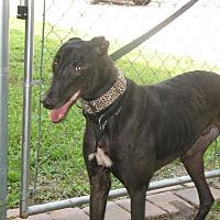 Adopt A Pet :: Wayne - Canadensis, PA
