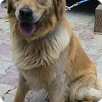 Adopt A Pet :: Jake - Washington, DC
