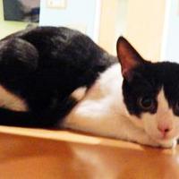 Adopt A Pet :: Tux D - Vienna, OH