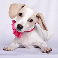 Adopt A Pet :: Jess - Baton Rouge, LA