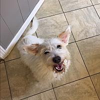Adopt A Pet :: Furley - Breaux Bridge, LA