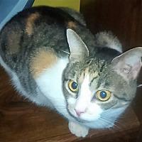 Adopt A Pet :: Tabby - Goldsboro, NC