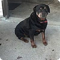 Adopt A Pet :: Tonka - Wilmington, DE