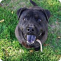 Adopt A Pet :: Morgan - Bonsall, CA