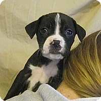 Adopt A Pet :: Ezme: Courtesy Post - Medora, IN