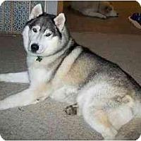 Adopt A Pet :: Ivan - Belleville, MI