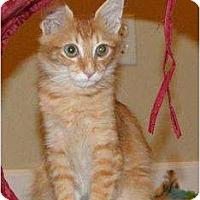 Adopt A Pet :: Finn - Orlando, FL