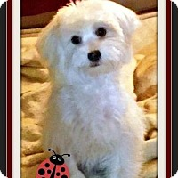 Adopt A Pet :: Jimi - Rancho Cucamonga, CA