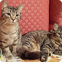Adopt A Pet :: Pebbles and Wilma - Southington, CT