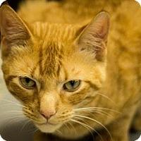 Adopt A Pet :: Fergus - Carroll, IA