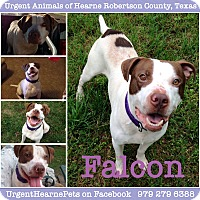 Adopt A Pet :: Falcon - Hearne, TX
