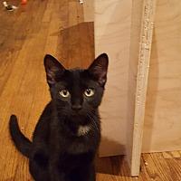 Adopt A Pet :: Simone - Ronkonkoma, NY