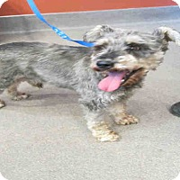 Adopt A Pet :: Fritz - Tracy, CA