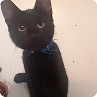 Adopt A Pet :: Emmett - Riverside, RI