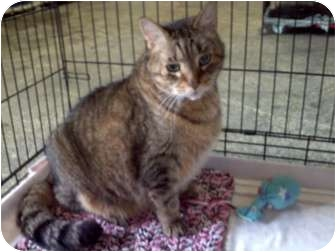Domestic Shorthair Cat for adoption in Columbiaville, Michigan - Tigger