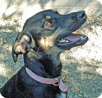 Coonhound Mix Dog for adoption in Irwin, Pennsylvania - Roxie