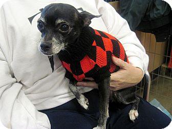 Chihuahua Mix Dog for adoption in Overland Park, Kansas - Sadie