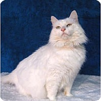 Adopt A Pet :: Linette - Centerburg, OH