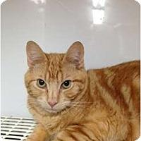 Adopt A Pet :: Mango - Wenatchee, WA