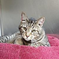 Adopt A Pet :: Snickers - Lago Vista, TX