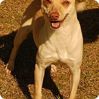 Adopt A Pet :: Gavin - Manning, SC
