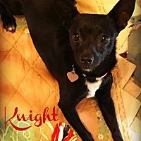 Adopt A Pet :: KNIGHT - Phoenix, AZ