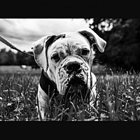 Adopt A Pet :: Newman *Courtesy Post* - Christiana, TN