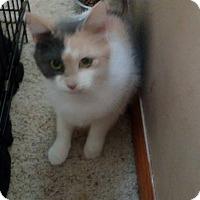 Adopt A Pet :: Mamasita - Enid, OK