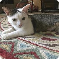 Adopt A Pet :: Rocco - Sugar Land, TX