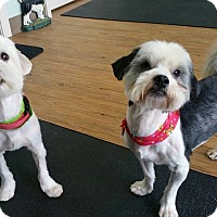 Adopt A Pet :: Fred and Barney - Lawrenceville, GA