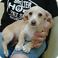 Adopt A Pet :: Haylen - Thousand Oaks, CA