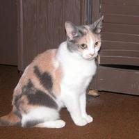 Adopt A Pet :: Joey - Salem, OH