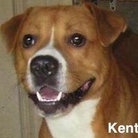 Adopt A Pet :: Kent - Tahlequah, OK